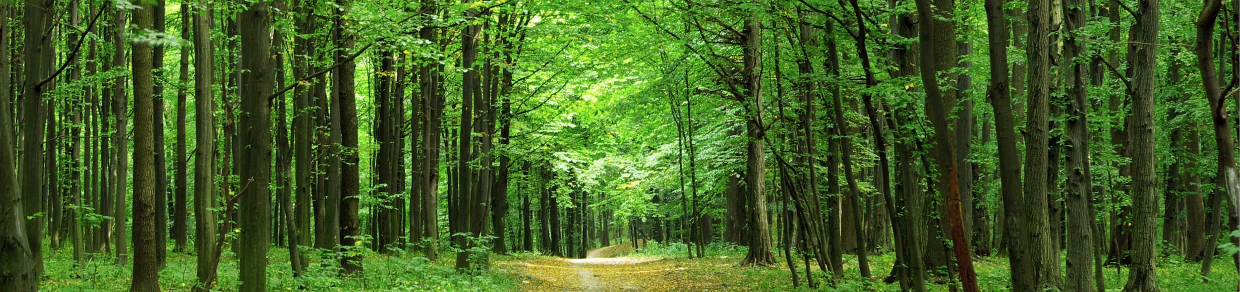 Ekol Hatıra Ormanları